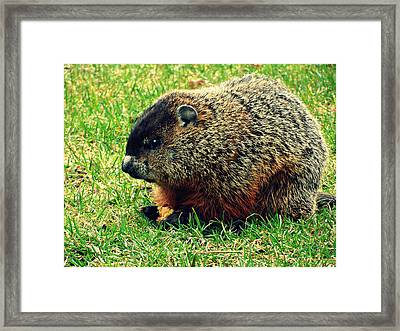 To Gopher Or Not Framed Print
