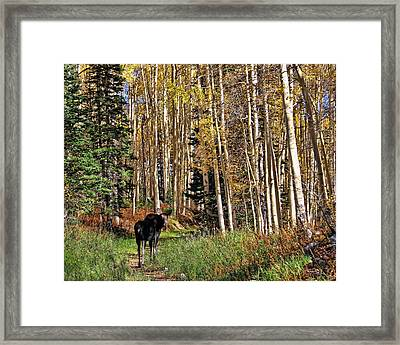 To Hike With A Moose Framed Print by Gene Praag