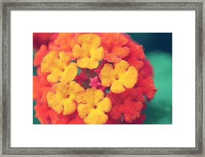 To Make You Happy Framed Print
