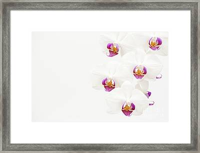 To One Side Framed Print by Anne Gilbert