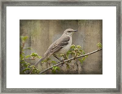 To Still A Mockingbird Framed Print