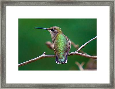 To The Left - To The Left Framed Print by Robert L Jackson