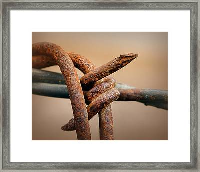 To The Point Framed Print by Nikolyn McDonald