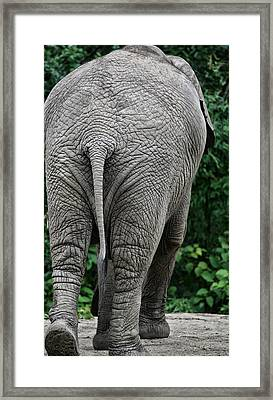 To The Rear March Framed Print by Karol Livote