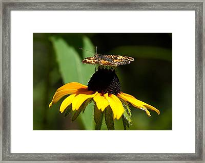 To Top It Off Framed Print by Steven Reed
