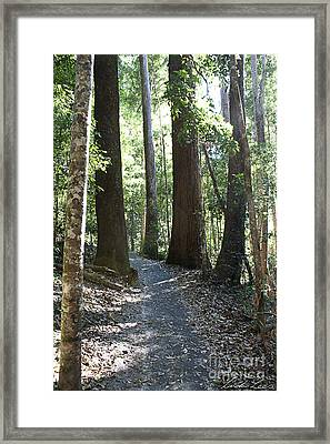 To Walk Among Giants Framed Print by Linda Lees