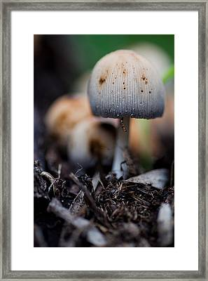 Toad Grove 1 Framed Print by Carole Hinding