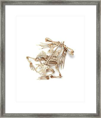 Toad Skeleton Framed Print by Ucl, Grant Museum Of Zoology