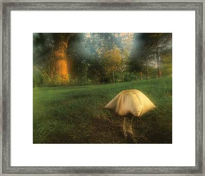 Toadstool In Fog Framed Print by Don Wolf