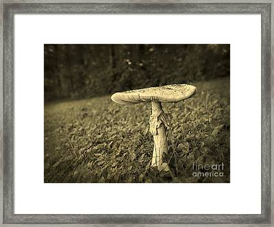 Toadstool Framed Print