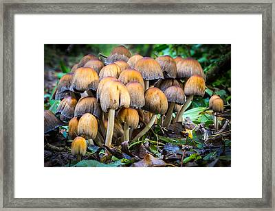 Framed Print featuring the photograph Toadstool Family. by Gary Gillette