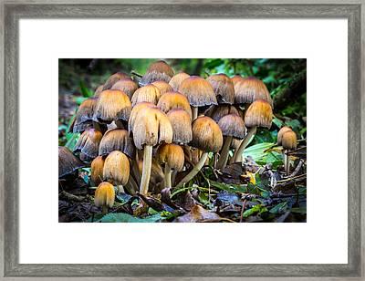 Toadstool Family. Framed Print