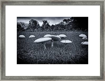 Toadstools-black And White Framed Print