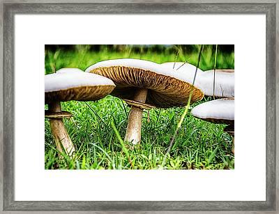 Toadstools V2 Framed Print