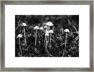 Toadstools V3 Framed Print by Douglas Barnard