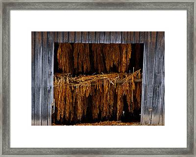 Tobacco Barn Framed Print by Dale  Gurvis