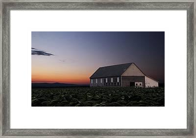 Tobacco Field Framed Print