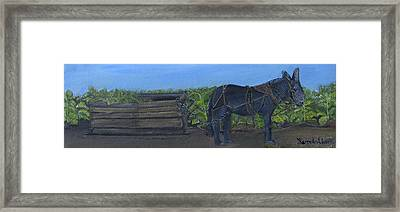 Tobacco Harvesting  Framed Print