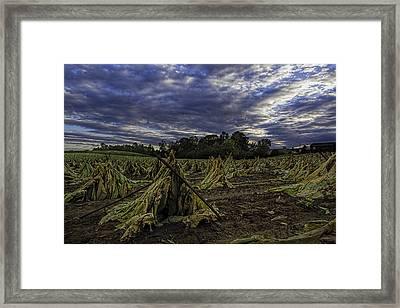 Tobacco Road II Framed Print