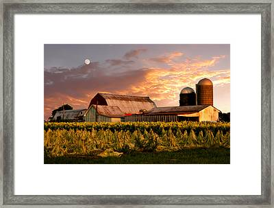 Tobacco Row Framed Print by Randall Branham