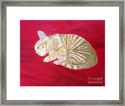 Tobey's Catnap Framed Print by CE Dill