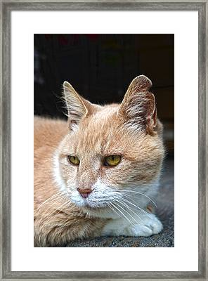 Toby The Old Mill Mouser Framed Print by Sandi OReilly