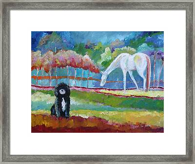 Toby The Poodle Framed Print