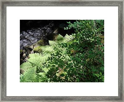 Tod Creek  Framed Print