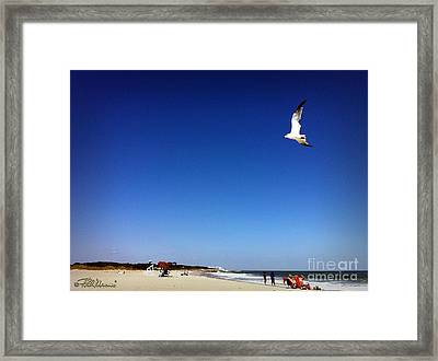 Framed Print featuring the photograph Today I Will Soar Like A Bird by Phil Mancuso