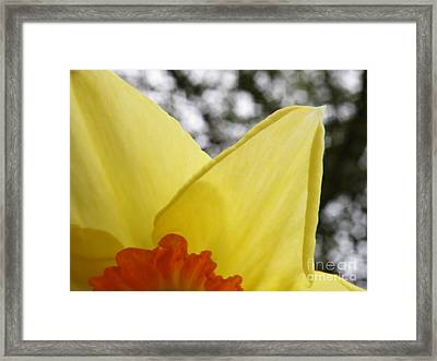Today Framed Print by Lainie Wrightson