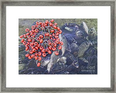 Today's Harvest Framed Print by Stelios Kleanthous