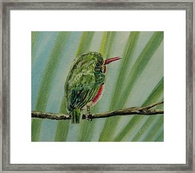Tody Bird On A Branch Framed Print by Richard Goohs