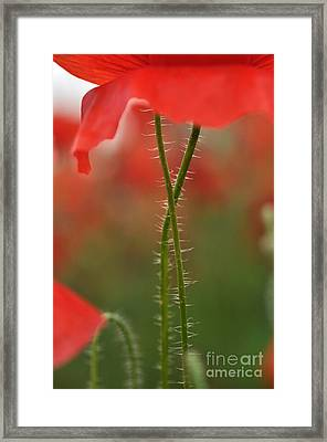 Framed Print featuring the photograph Together Forever by Simona Ghidini