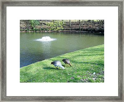 Framed Print featuring the photograph Together by Ramona Matei