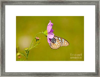 Togetherness Framed Print by Fotosas Photography