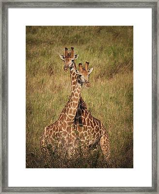 Framed Print featuring the photograph Togetherness by Kim Andelkovic