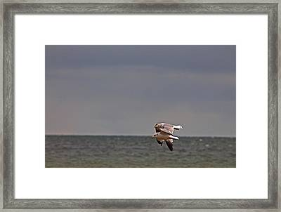 Togetherness Framed Print by Rhonda Humphreys