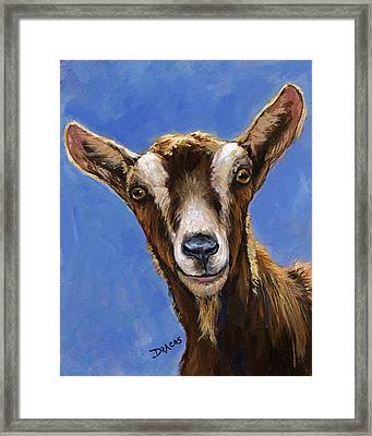 Toggenburg Goat On Blue Framed Print by Dottie Dracos