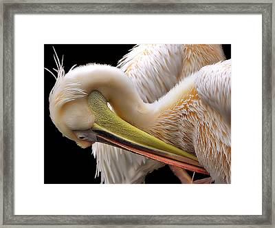 Toileting... Framed Print