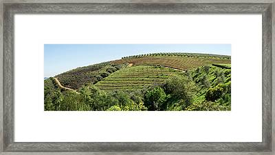 Tokara Vineyard, Delaire Graff Estate Framed Print by Panoramic Images