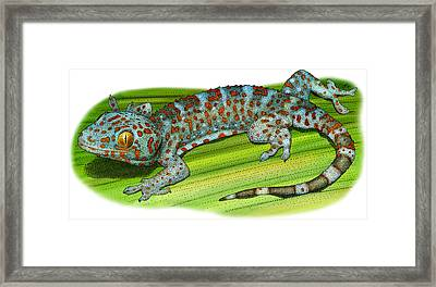 Tokay Gecko Framed Print by Roger Hall