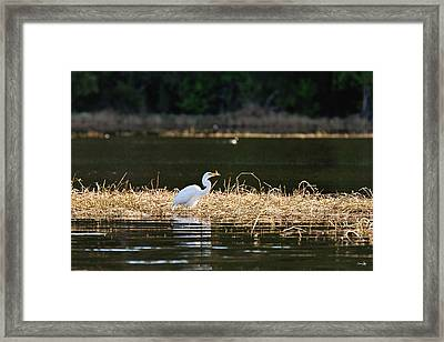Toledo Bend Brunch Framed Print by Scott Pellegrin