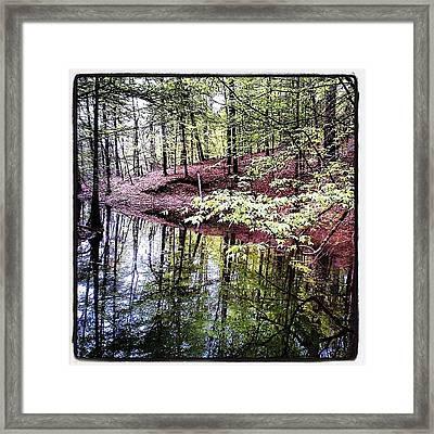 Toledo Bend Creek Framed Print