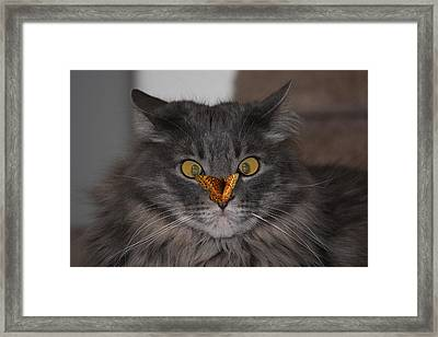 Tolerance Framed Print by Shane Bechler