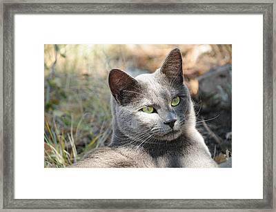 Tom Cat Framed Print
