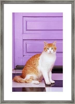 Tom Framed Print by Martina  Rathgens