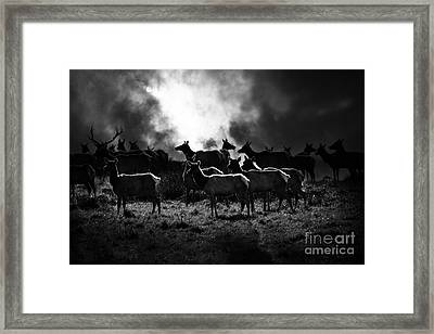 Tomales Bay Harem Under The Midnight Moon - 7d21241 - Black And White Framed Print by Wingsdomain Art and Photography