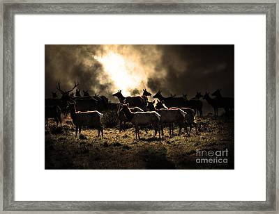 Tomales Bay Harem Under The Midnight Moon - 7d21241 - Sepia Framed Print by Wingsdomain Art and Photography