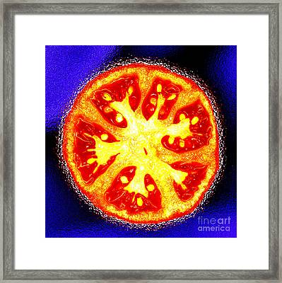 Tomato In Red Yellow And Blue Framed Print by Nancy Mueller