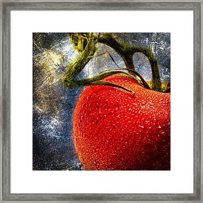 Tomato On A Vine Framed Print